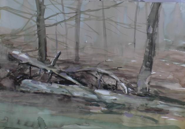 Omgevallen Den bij het De Siptenpad - Kaaistoep - 25022019 (30 x 42)
