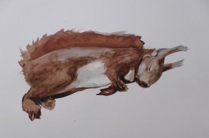 Dode Eekhoorn 27032019 (3)