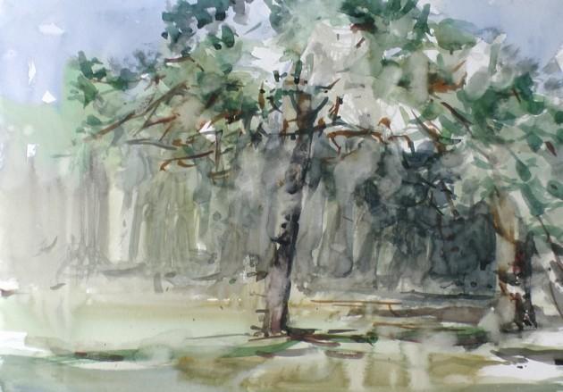 Twee grove dennen aan het De Siptenpad - Kaaistoep - 15042019 (30 x 42)