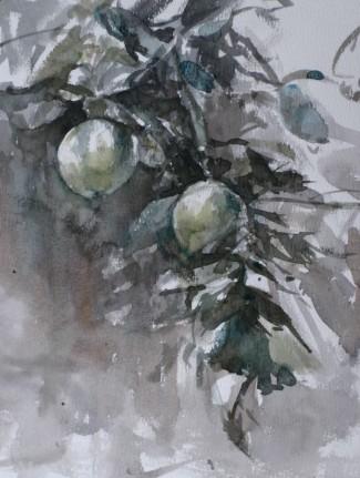 Appels in een boom - 11072019 (1)