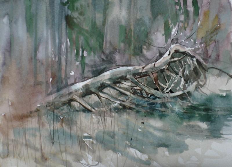 Omgevallen Grove Den - Kaaistoep - 29112019 (30 x 40)
